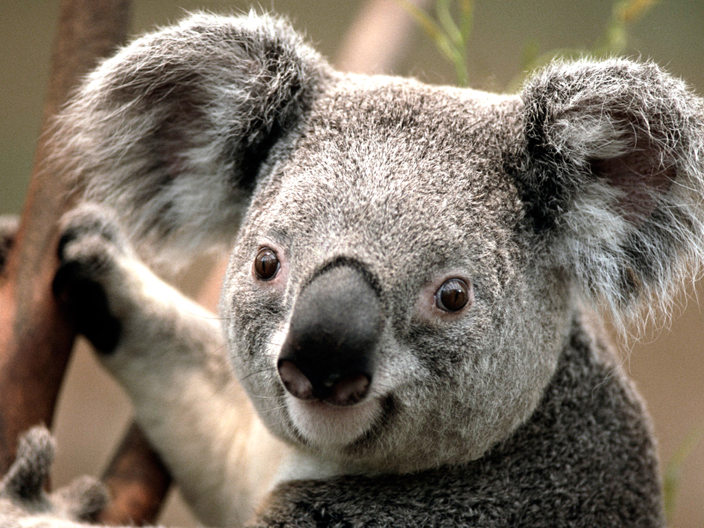 mb-file.php?path=2017%2F01%2F14%2FF996_Koala.jpg