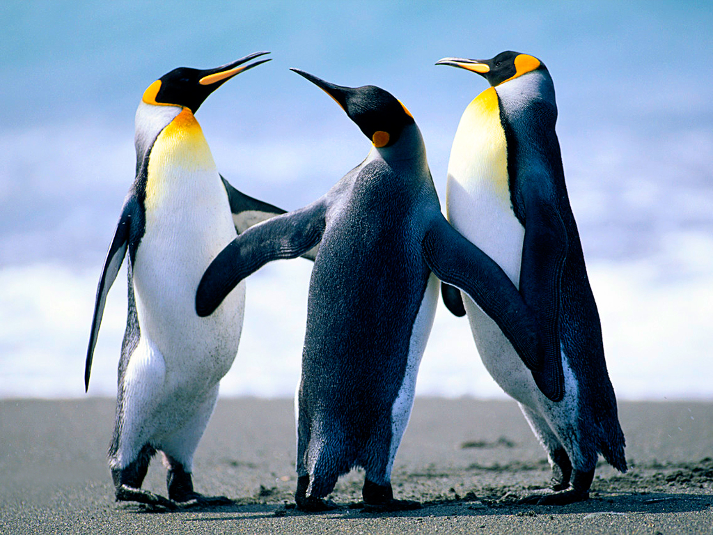 mb-file.php?path=2017%2F11%2F13%2FF1624_Penguins.jpg