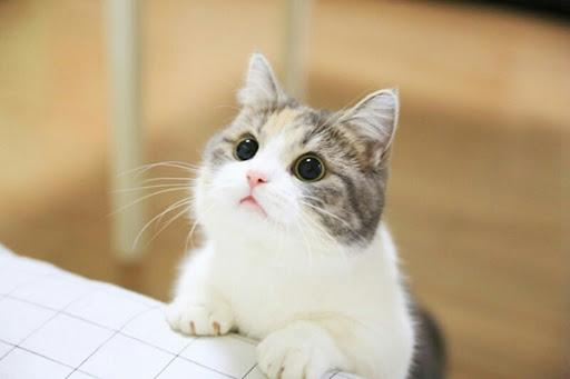 mb-file.php?path=2021%2F01%2F05%2FF3962_cat.jpg
